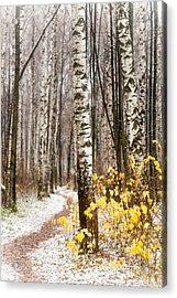 First Snow. Hidden Path Acrylic Print by Jenny Rainbow