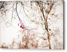 First Snow. Touch Of Gold Acrylic Print by Jenny Rainbow