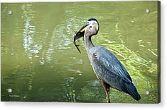 Fish Dinner Acrylic Print by Susi Stroud