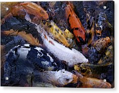 Fish Frenzy Acrylic Print by Justin  Curry