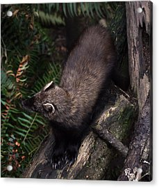 Fisher - 0005 Acrylic Print by S and S Photo