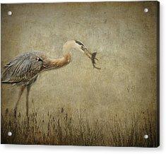 Fishin' Acrylic Print by Mario Celzner