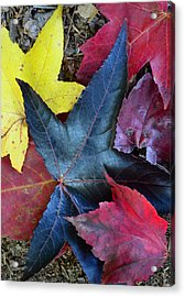 Five Fall Leaves Acrylic Print by Sandi OReilly