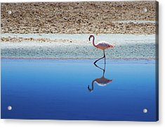 Flamingo Acrylic Print by MaCnuel