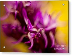 Floral Abstract 4 Acrylic Print by Idaho Scenic Images Linda Lantzy