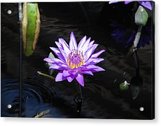 Floral Burst Of Purple Acrylic Print by Jennifer Ancker
