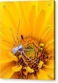 Floral Spider Acrylic Print by Mark J Seefeldt