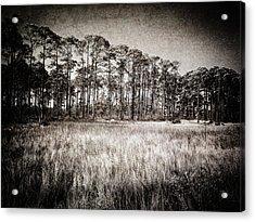 Florida Pine 2 Acrylic Print by Skip Nall