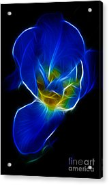 Flower - Coral Blue - Abstract Acrylic Print by Paul Ward