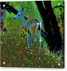 Flower Child Acrylic Print by Helen Carson