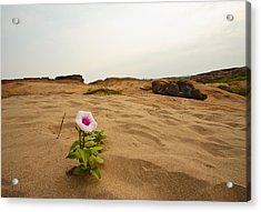 Flower In Desert Acrylic Print by Panya Jampatong