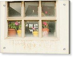 Flower Pots Acrylic Print by Ariane Moshayedi
