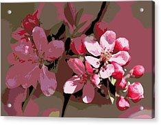 Flowering Crabapple Posterized Acrylic Print by Mark J Seefeldt