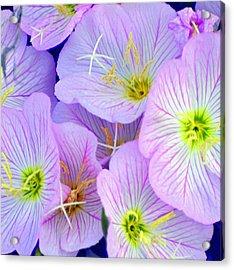 Flowers Flowers Acrylic Print by Marty Koch