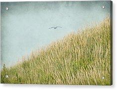 Fly Away Acrylic Print by Cathy Kovarik