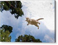 Flying Cat Acrylic Print by Micael  Carlsson
