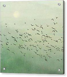 Flying Flock Of Birds Acrylic Print by Laura Ruth