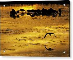 Flying Home - Florida Wetlands Wading Birds Scene Acrylic Print by Rob Travis