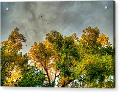 Flying Leaves Acrylic Print by Stephen  Johnson