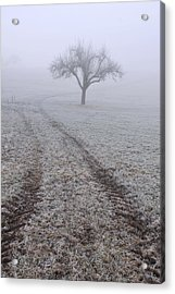 Foggy Landscape With Tree Acrylic Print by Matthias Hauser