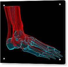 Foot Anatomy, Artwork Acrylic Print by Andrzej Wojcicki
