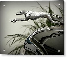 Ford Greyhound Radiator Cap Acrylic Print by Karyn Robinson