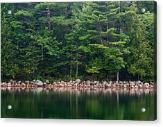 Forest At Jordan Pond Acadia Acrylic Print by Steve Gadomski