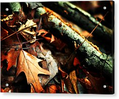 Forest Fade Away Acrylic Print by Rebecca Sherman
