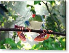 Forest Frog Acrylic Print by Ilendra Vyas
