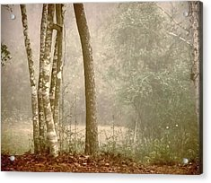 Forest In Fog Acrylic Print by Robert Brown