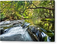 Forest Jewel Acrylic Print by Debra and Dave Vanderlaan
