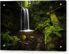 Forest Pool Acrylic Print by Mike Reid