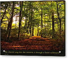 Forest Wilderness Acrylic Print by Yvon van der Wijk