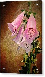 Fox Glove Grunge Acrylic Print by Bill Cannon