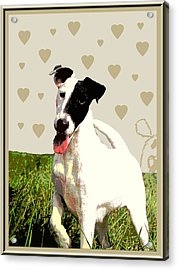 Fox Terrier Smooth Acrylic Print by One Rude Dawg Orcutt