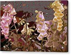 Foxglove Acrylic Print by Renata Ferenc