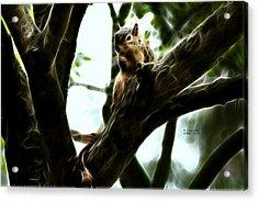 Fractal - Thumb Sucker - Robbie The Squirrel - 8574 Acrylic Print by James Ahn