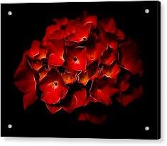 Fractalius Red Hydrangea Acrylic Print by Jay Lethbridge