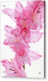 Fragility In Pink Acrylic Print by Anita Antonia Nowack