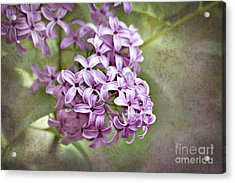 Fragrant Purple Lilac Acrylic Print by Cheryl Davis