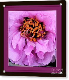 Framed In Purple - Abstract Floral Acrylic Print by Carol Groenen