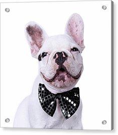 French Bulldog And Bow Tie Acrylic Print by Maika 777
