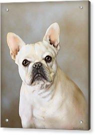 French Bulldog Luna Acrylic Print by Barbara Hymer