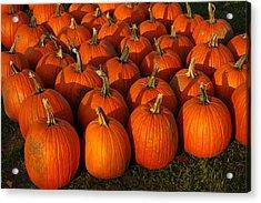 Fresh From The Farm Orange Pumpkins Acrylic Print by LeeAnn McLaneGoetz McLaneGoetzStudioLLCcom