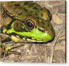 Frog Acrylic Print by Debbie Finley