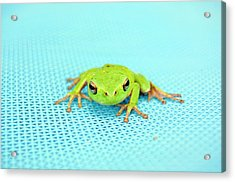 Frog Italy Acrylic Print by Rhys Griffiths Photography