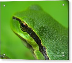 Frog Look Acrylic Print by Odon Czintos