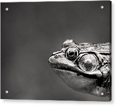 Frog Portrait Acrylic Print by Cappi Thompson