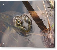 Frog Acrylic Print by Samantha Howell
