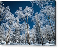 Frost And Snow Covered Trees, Colorado Acrylic Print by Karen Desjardin